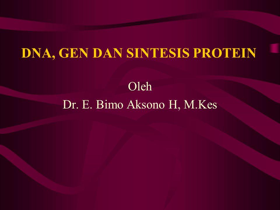 GEN Merupakan segmen DNA yang menyimpan informasi genetik susunan asam amino suatu rantai polipeptida/protein Molekul DNA dlm inti banyak gen Molekul DNA dlm mitokondria sedikit gen Molekul DNA ibarat suatu buku resep Gen merupakan satu lembar resep Nukleotida merupakan satu huruf