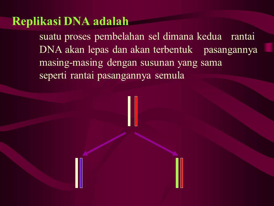 Replikasi DNA adalah suatu proses pembelahan sel dimana kedua rantai DNA akan lepas dan akan terbentuk pasangannya masing-masing dengan susunan yang s