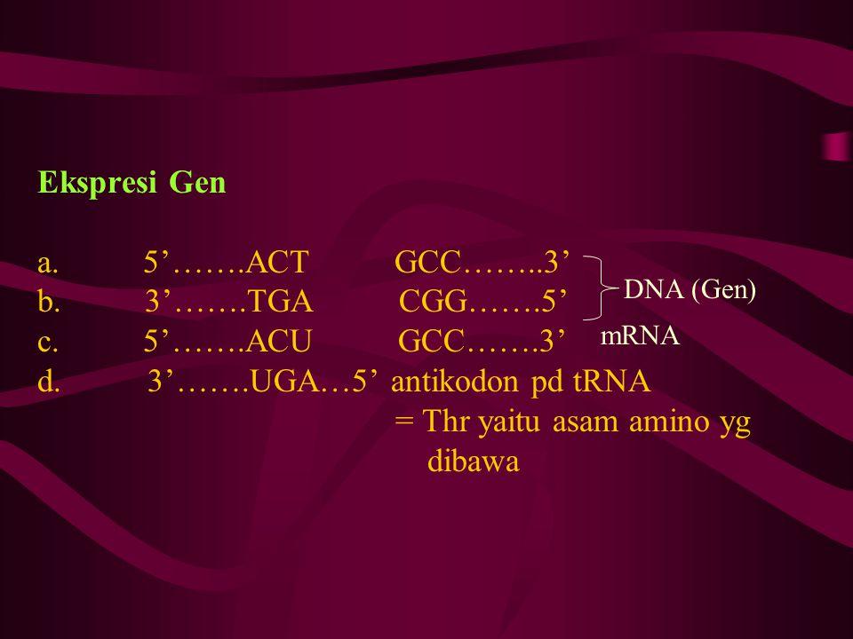 Ekspresi Gen a. 5'…….ACT GCC……..3' b. 3'…….TGA CGG…….5' c. 5'…….ACU GCC…….3' d. 3'…….UGA…5' antikodon pd tRNA = Thr yaitu asam amino yg dibawa DNA (Ge
