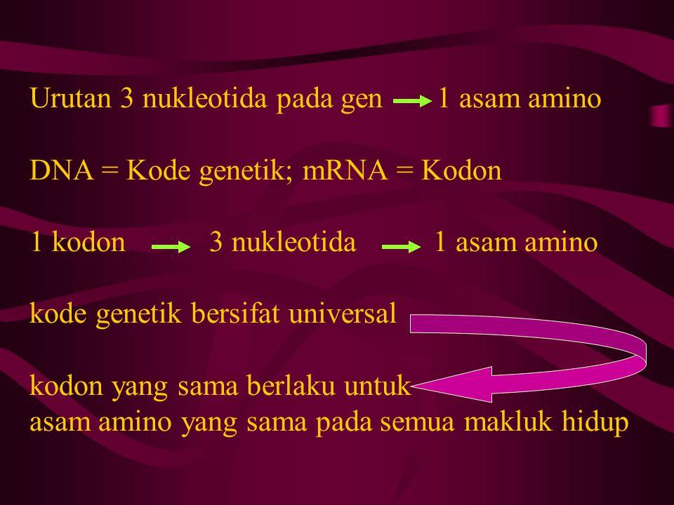 Urutan 3 nukleotida pada gen 1 asam amino DNA = Kode genetik; mRNA = Kodon 1 kodon 3 nukleotida 1 asam amino kode genetik bersifat universal kodon yan
