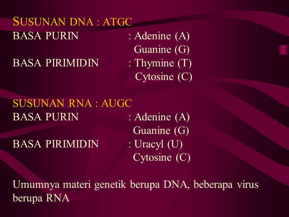 S USUNAN DNA : ATGC BASA PURIN : Adenine (A) Guanine (G) BASA PIRIMIDIN : Thymine (T) Cytosine (C) SUSUNAN RNA : AUGC BASA PURIN : Adenine (A) Guanine