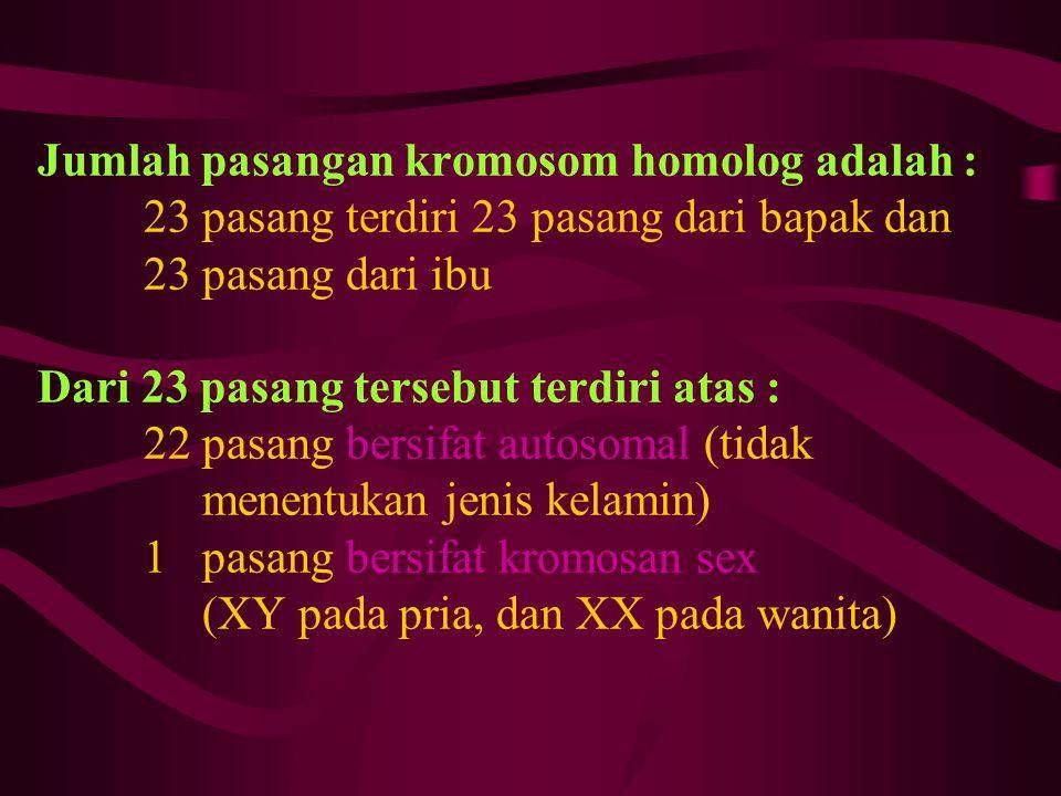 Jumlah pasangan kromosom homolog adalah : 23 pasang terdiri 23 pasang dari bapak dan 23 pasang dari ibu Dari 23 pasang tersebut terdiri atas : 22 pasa