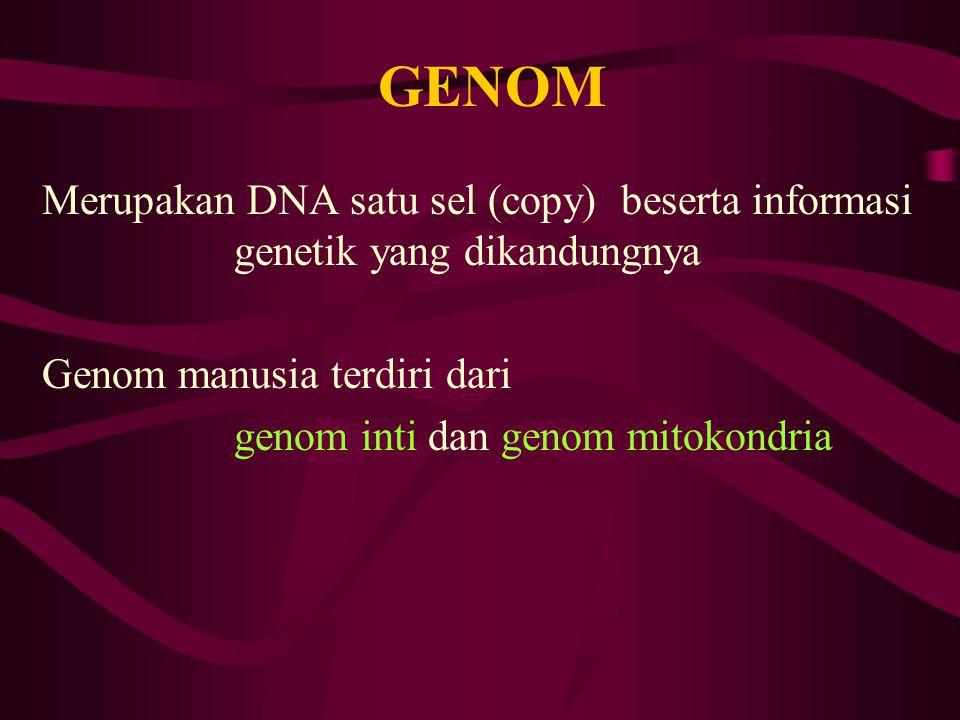 GENOM Merupakan DNA satu sel (copy) beserta informasi genetik yang dikandungnya Genom manusia terdiri dari genom inti dan genom mitokondria
