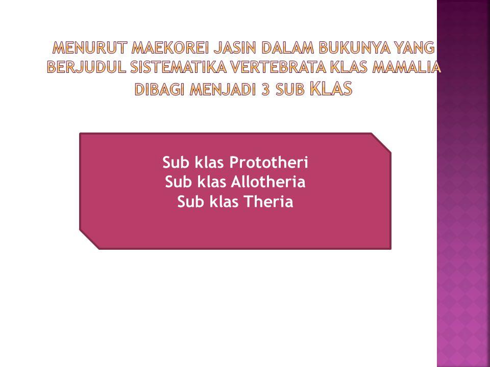 Sub klas Prototheri Sub klas Allotheria Sub klas Theria