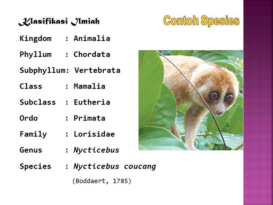 Klasifikasi Ilmiah Kingdom: Animalia Phyllum: Chordata Subphyllum: Vertebrata Class: Mamalia Subclass: Eutheria Ordo: Primata Family: Lorisidae Genus: