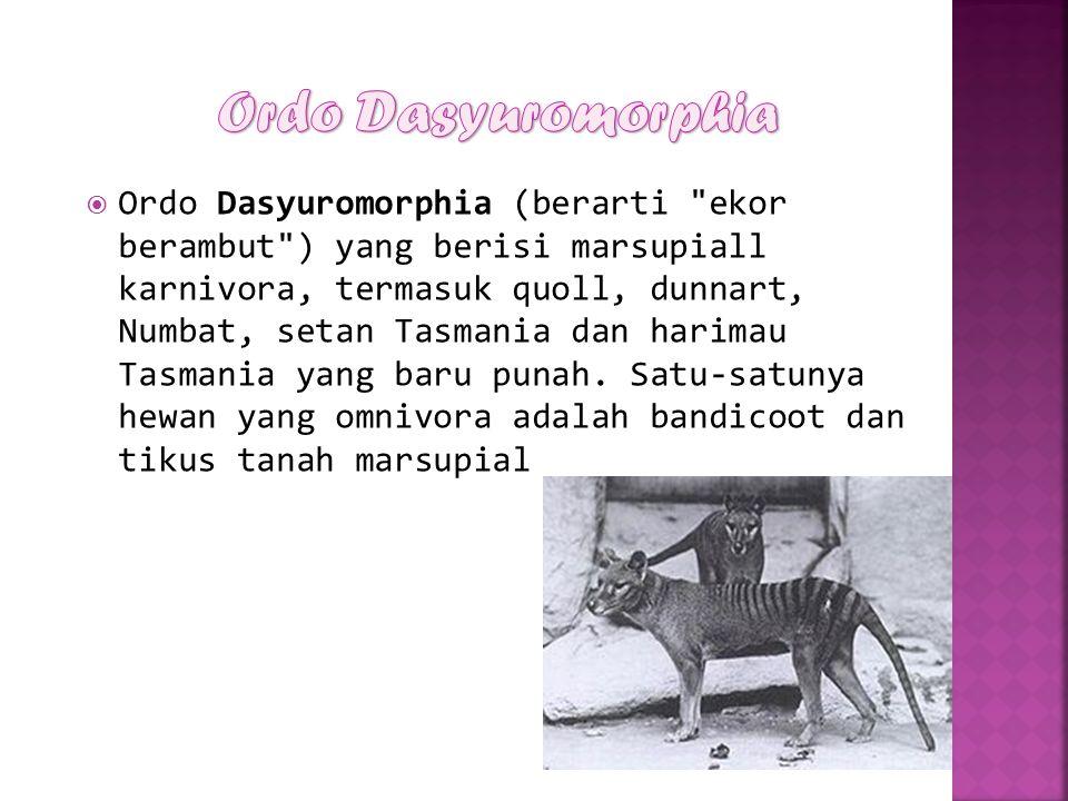  Ordo Dasyuromorphia (berarti