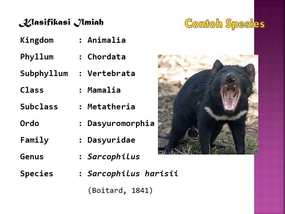 Klasifikasi Ilmiah Kingdom: Animalia Phyllum: Chordata Subphyllum: Vertebrata Class: Mamalia Subclass: Metatheria Ordo: Dasyuromorphia Family: Dasyuri