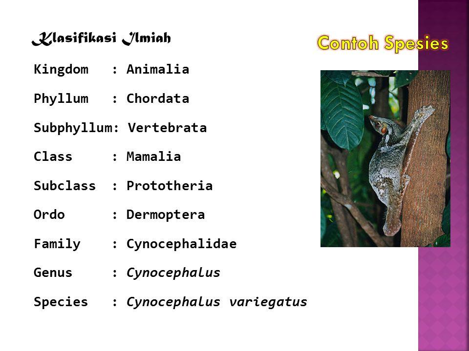 Klasifikasi Ilmiah Kingdom: Animalia Phyllum: Chordata Subphyllum: Vertebrata Class: Mamalia Subclass: Prototheria Ordo: Dermoptera Family: Cynocephal