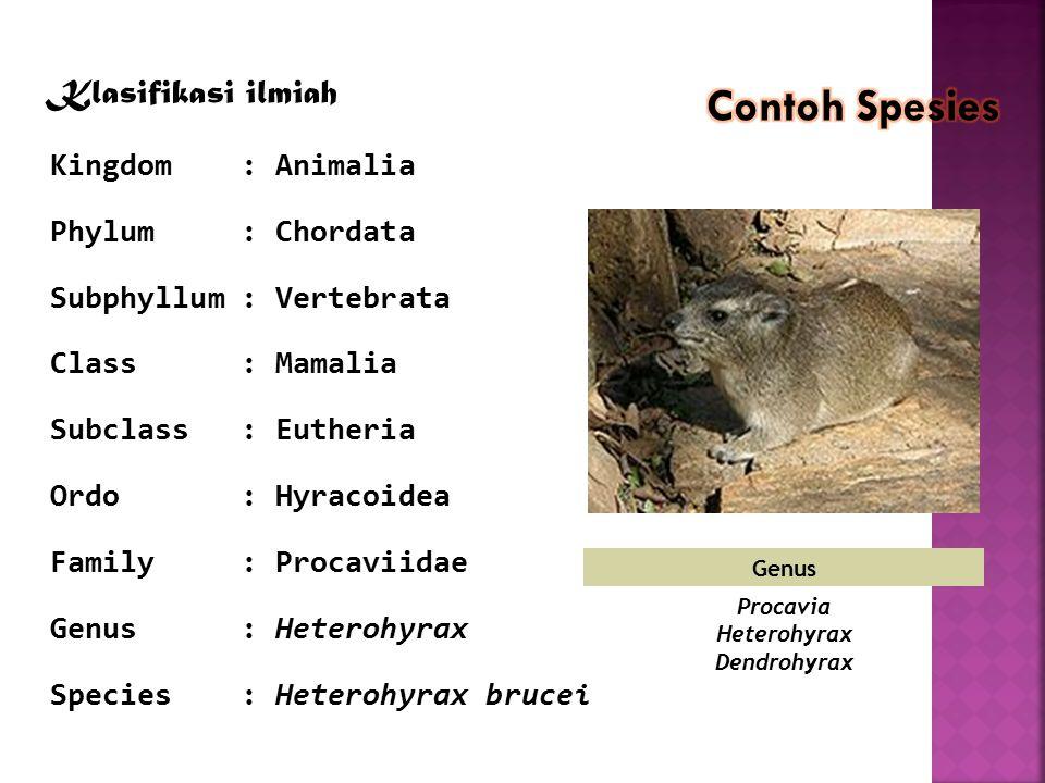 Genus Procavia Heterohyrax Dendrohyrax Klasifikasi ilmiah Kingdom: Animalia Phylum: Chordata Subphyllum: Vertebrata Class: Mamalia Subclass: Eutheria