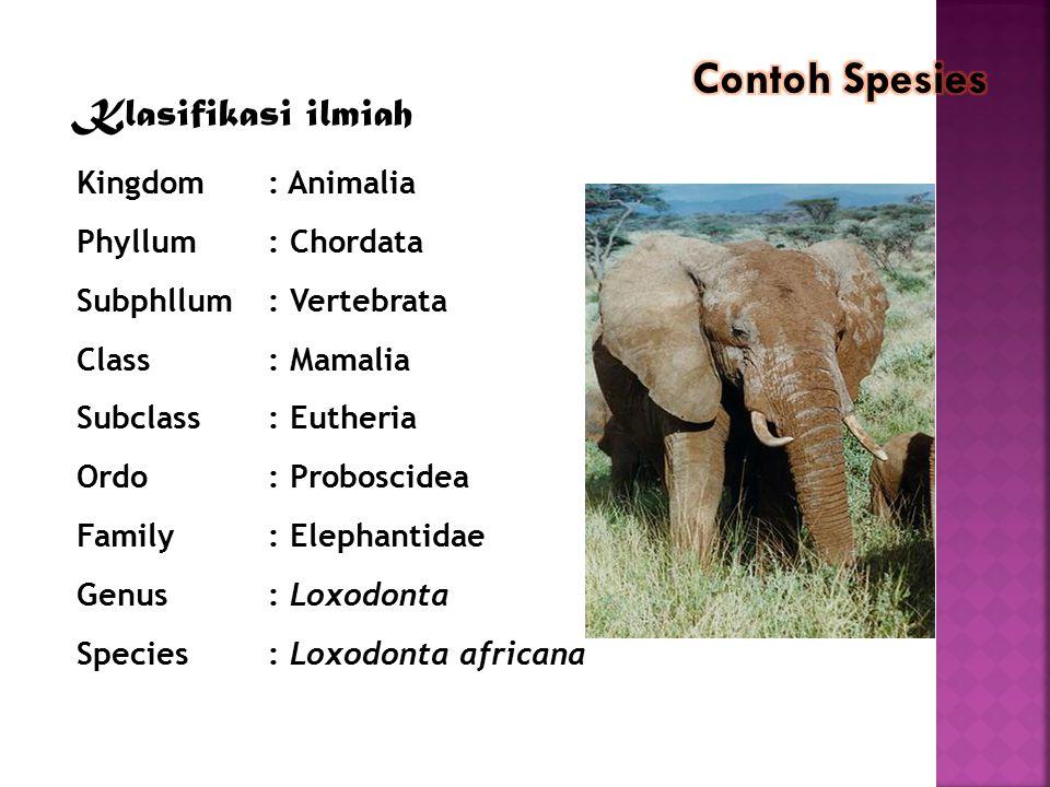 contoh Klasifikasi ilmiah Kingdom: Animalia Phyllum: Chordata Subphllum: Vertebrata Class: Mamalia Subclass: Eutheria Ordo: Proboscidea Family: Elepha