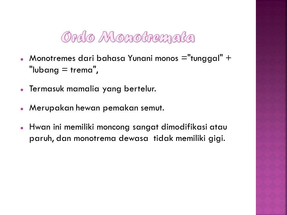 Monotremes dari bahasa Yunani monos =
