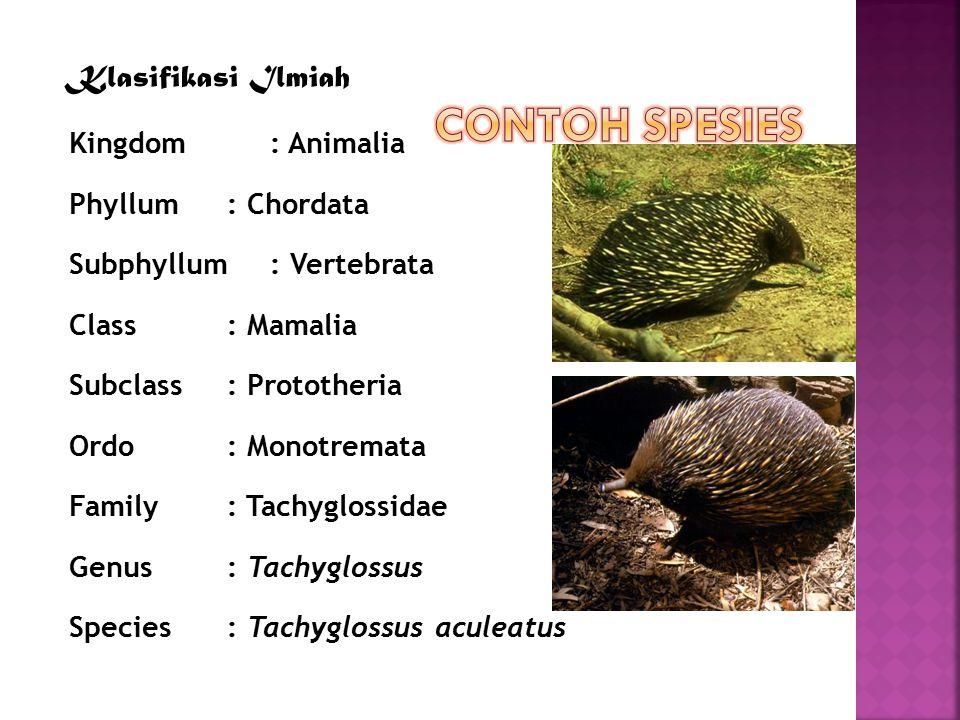 contoh Klasifikasi Ilmiah Kingdom: Animalia Phyllum: Chordata Subphyllum: Vertebrata Class: Mamalia Subclass: Prototheria Ordo: Monotremata Family: Ta