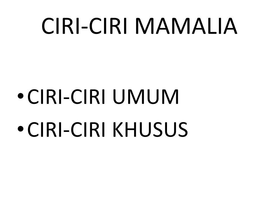 CIRI-CIRI MAMALIA CIRI-CIRI UMUM CIRI-CIRI KHUSUS