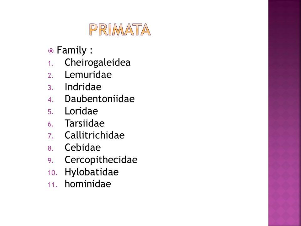  Family : 1. Cheirogaleidea 2. Lemuridae 3. Indridae 4. Daubentoniidae 5. Loridae 6. Tarsiidae 7. Callitrichidae 8. Cebidae 9. Cercopithecidae 10. Hy