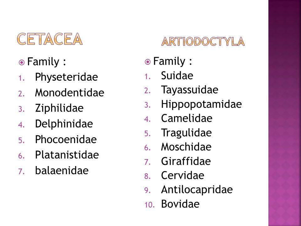  Family : 1. Physeteridae 2. Monodentidae 3. Ziphilidae 4. Delphinidae 5. Phocoenidae 6. Platanistidae 7. balaenidae  Family : 1. Suidae 2. Tayassui