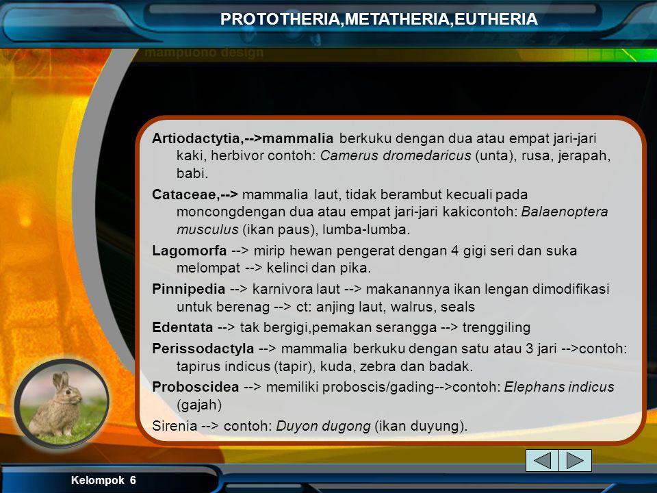 Kelompok 6 PROTOTHERIA,METATHERIA,EUTHERIA berikut ini beberapa ordonya Rodentia, --> karakternya: gigi seri seperti pahat --> contoh : tikus Chiropte
