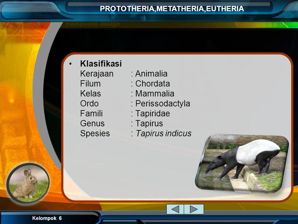 Kelompok 6 PROTOTHERIA,METATHERIA,EUTHERIA Ordo Perissodactyla (Mammalia berkuku jari ganjil) contoh: kuda, tapir, badak Ciri-ciri : 1. Merupakan Mamm