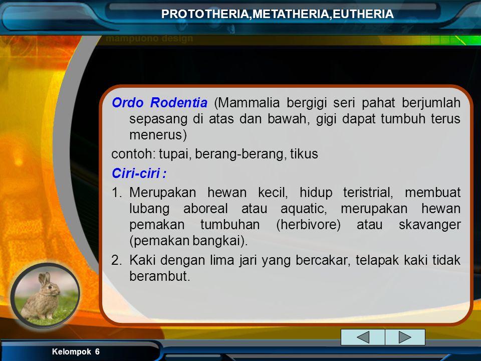 Kelompok 6 PROTOTHERIA,METATHERIA,EUTHERIA Klasifikasi Kingdom : Animalia Phylum: Chordata Class : Mammalia Infraclass : Eutheria Superorder : Afrothe