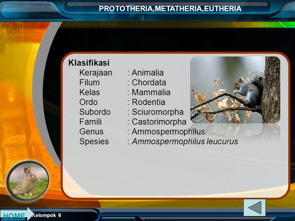 Kelompok 6 PROTOTHERIA,METATHERIA,EUTHERIA Ordo Rodentia (Mammalia bergigi seri pahat berjumlah sepasang di atas dan bawah, gigi dapat tumbuh terus me