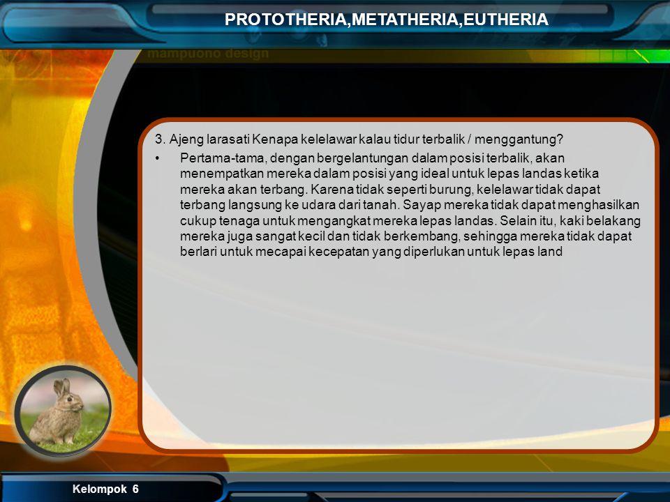 Kelompok 6 PROTOTHERIA,METATHERIA,EUTHERIA 2. Reno yudistira Mamalia chiroptera (terbang )bagaimana cara pertahanan hidupnya di siang hari? Kelelawar