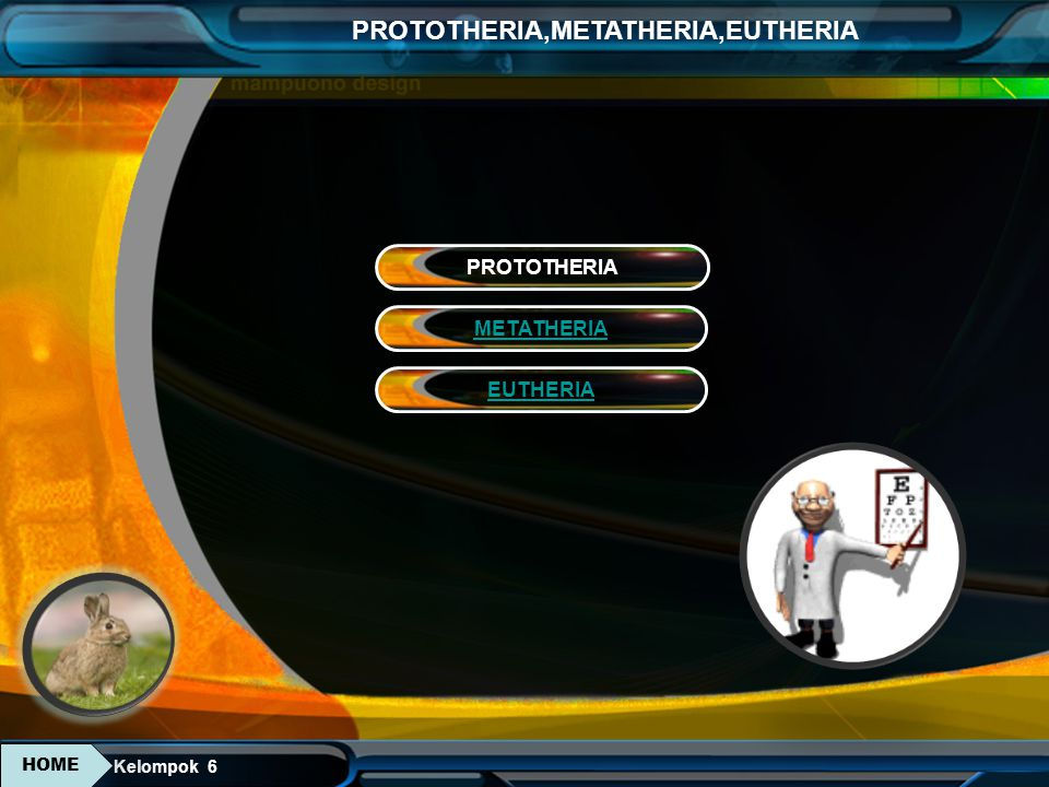Kelompok 6 PROTOTHERIA,METATHERIA,EUTHERIA Ordo Sirenia (Mammalia yang bertungkai depan mirip sirip) contoh: dugong Ciri-ciri : 1.Merupakan Mammalia air yang berukuran sedang sampai besar, dengan badan pejaol, agak lebar.