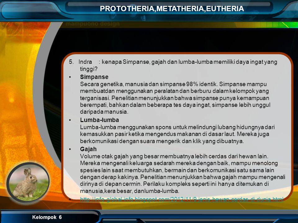 Kelompok 6 PROTOTHERIA,METATHERIA,EUTHERIA Sebenarnya penyebab mata bersinar itu disebabkan suatu lapisan yang terdapat dalam bola mata, lapisan itu b