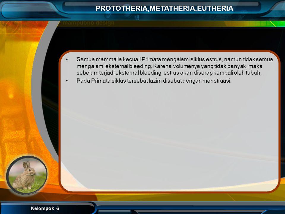 Kelompok 6 PROTOTHERIA,METATHERIA,EUTHERIA 6. Rukhaeni: Platypus saat berenang menutup matanya rapat-rapat dan menyerahkan sisanya kepada sisanya kepa