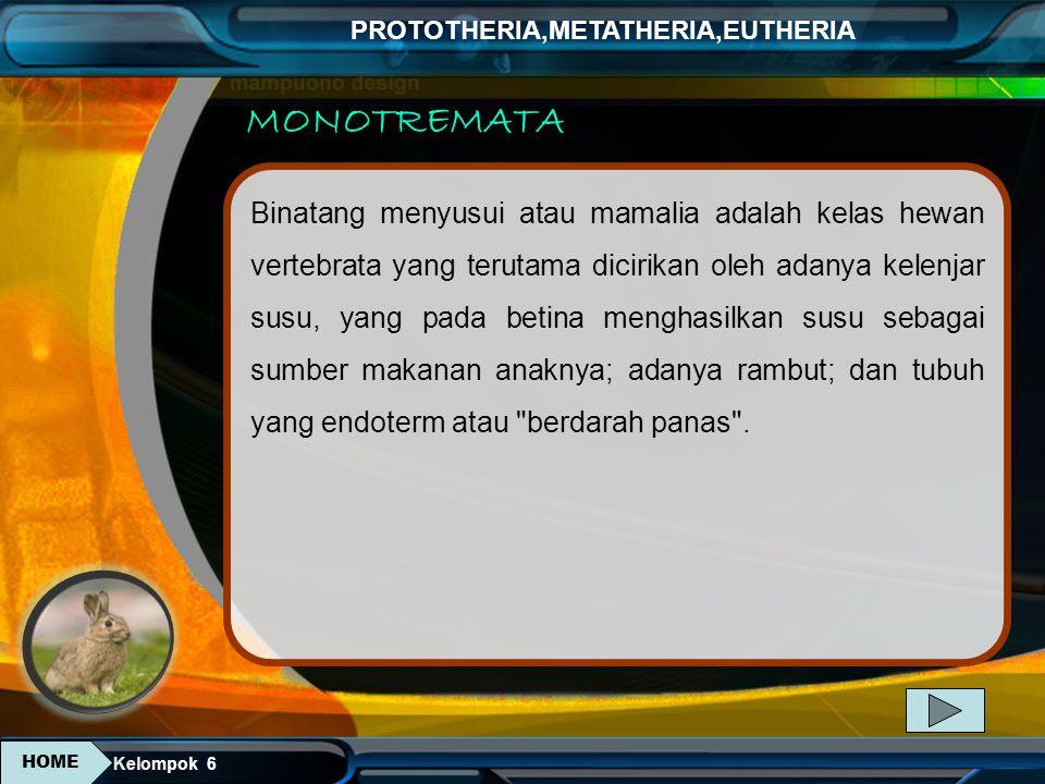 Kelompok 6 PROTOTHERIA,METATHERIA,EUTHERIA Klasifikasi Kingdom : Animalia Phylum: Chordata Class : Mammalia Infraclass : Eutheria Superorder : Afrotheria Order : Sirenia Famili : Dugongidae Genus : Trichechus Spesies : Trichechus manatus