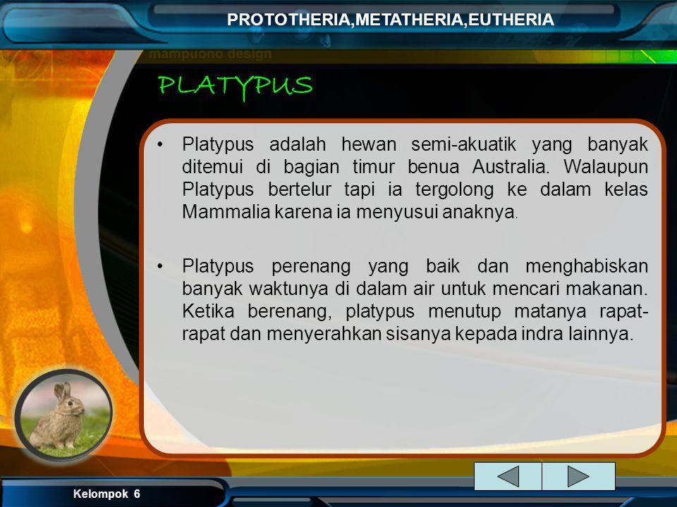 Kelompok 6 PROTOTHERIA,METATHERIA,EUTHERIA PLATYPUS Platypus adalah hewan semi-akuatik yang banyak ditemui di bagian timur benua Australia.