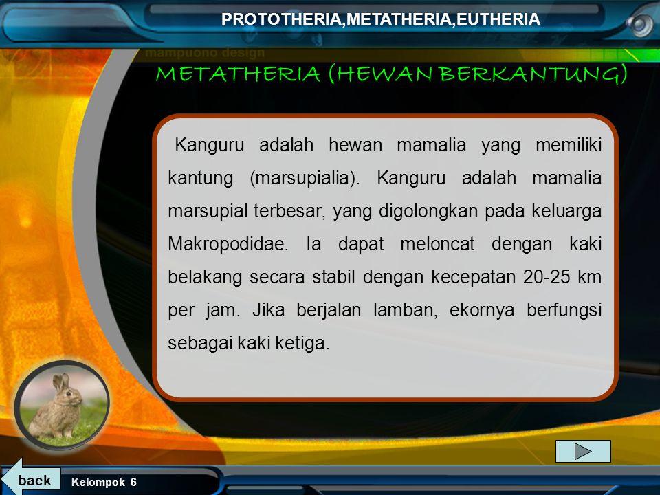 Kelompok 6 PROTOTHERIA,METATHERIA,EUTHERIA EKIDNA Ekidna adalah mammalia kecil yang tubuhnya ditutupi rambut kasar dan duri.memiliki mulut yang mungil