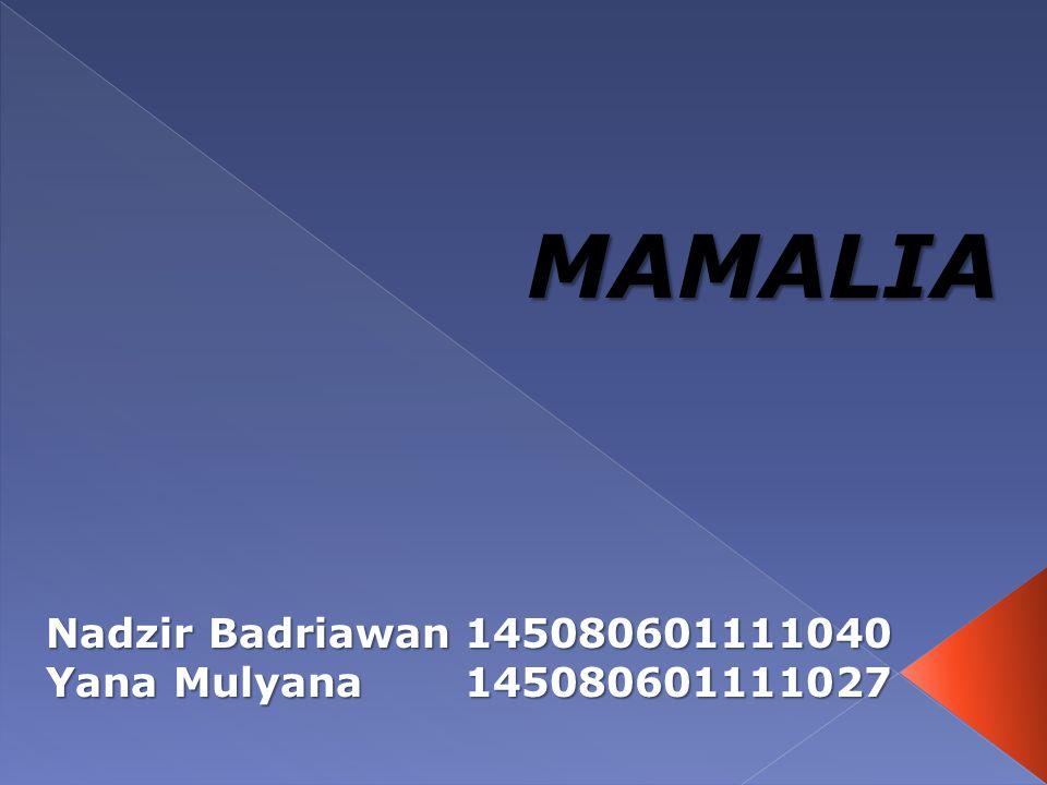 MAMALIA Nadzir Badriawan145080601111040 Yana Mulyana145080601111027
