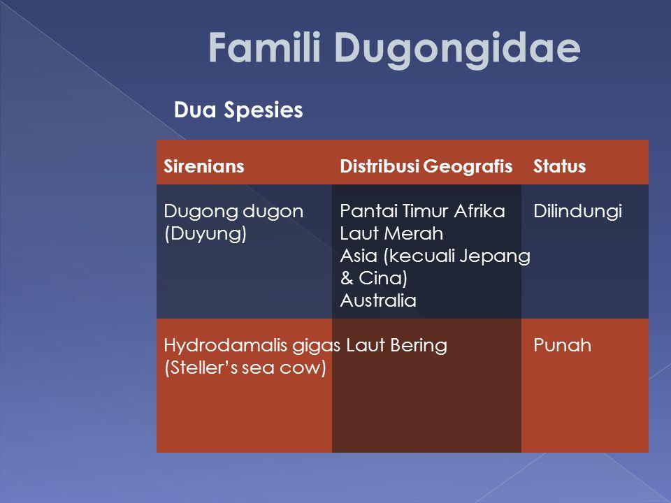 Dua Spesies SireniansDistribusi GeografisStatus Dugong dugonPantai Timur AfrikaDilindungi (Duyung)Laut Merah Asia (kecuali Jepang & Cina) Australia Hy