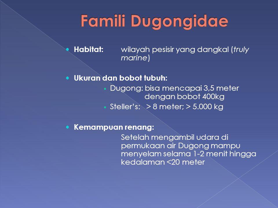 Habitat: wilayah pesisir yang dangkal (truly marine) Ukuran dan bobot tubuh: Dugong: bisa mencapai 3,5 meter dengan bobot 400kg Steller's: > 8 meter;
