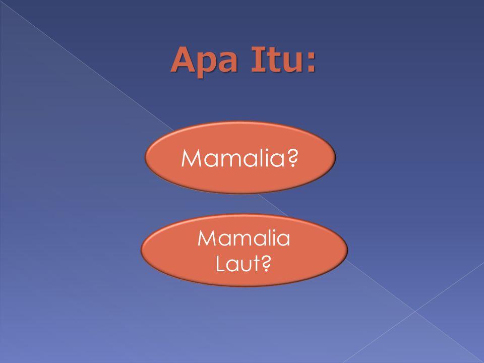 Apa Itu: Mamalia? Mamalia Laut?