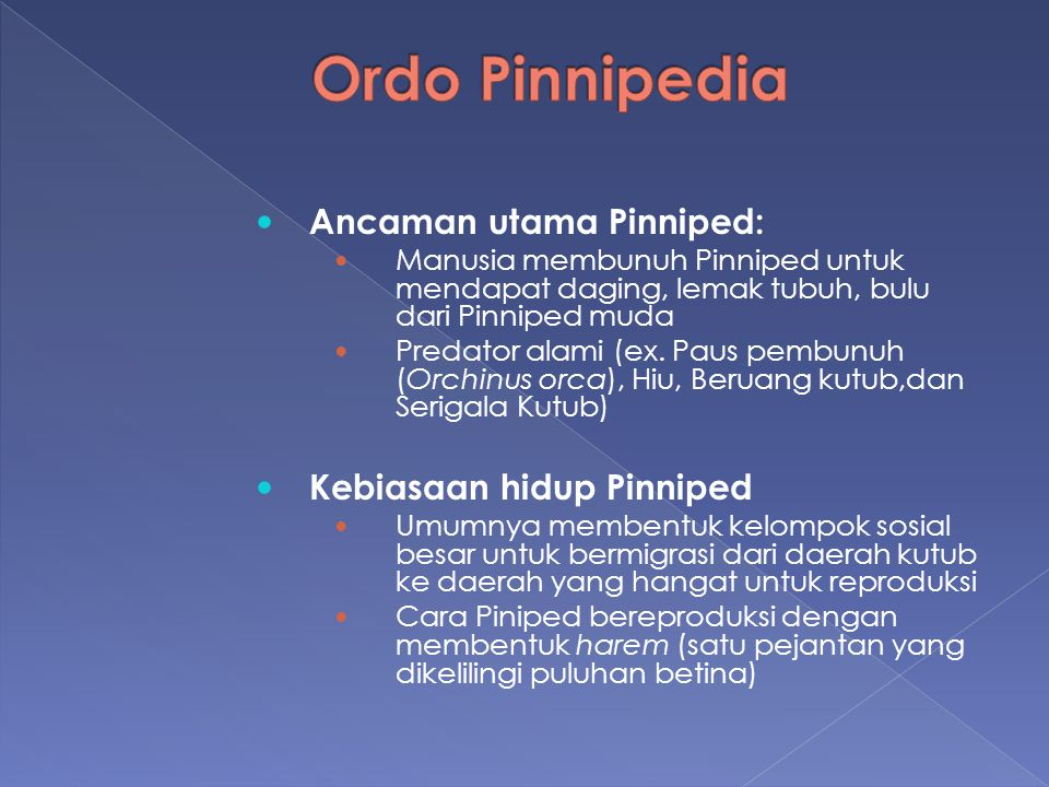 Ancaman utama Pinniped: Manusia membunuh Pinniped untuk mendapat daging, lemak tubuh, bulu dari Pinniped muda Predator alami (ex. Paus pembunuh (Orchi