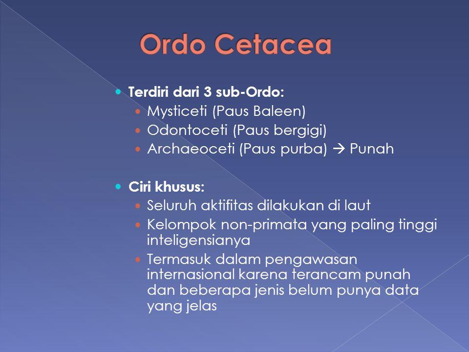 Terdiri dari 3 sub-Ordo: Mysticeti (Paus Baleen) Odontoceti (Paus bergigi) Archaeoceti (Paus purba)  Punah Ciri khusus: Seluruh aktifitas dilakukan d