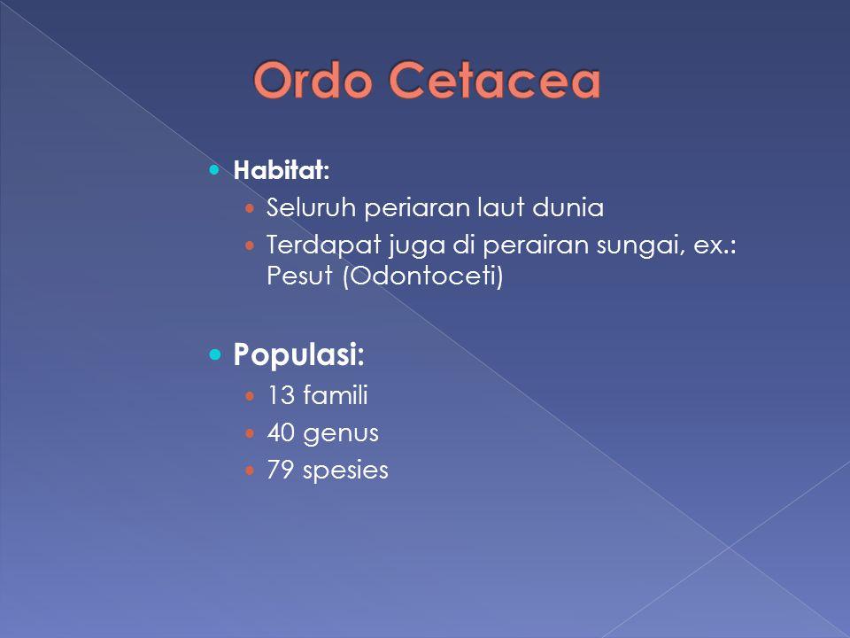 Habitat: Seluruh periaran laut dunia Terdapat juga di perairan sungai, ex.: Pesut (Odontoceti) Populasi: 13 famili 40 genus 79 spesies