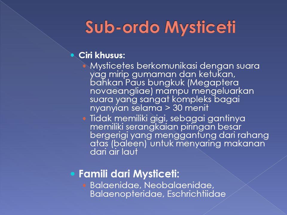 Ciri khusus: Mysticetes berkomunikasi dengan suara yag mirip gumaman dan ketukan, bahkan Paus bungkuk (Megaptera novaeangliae) mampu mengeluarkan suar