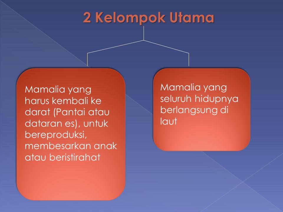 2 Kelompok Utama Mamalia yang harus kembali ke darat (Pantai atau dataran es), untuk bereproduksi, membesarkan anak atau beristirahat Mamalia yang sel