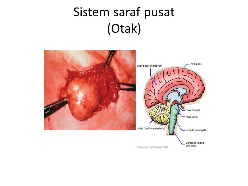 Sistem saraf pusat (Otak)