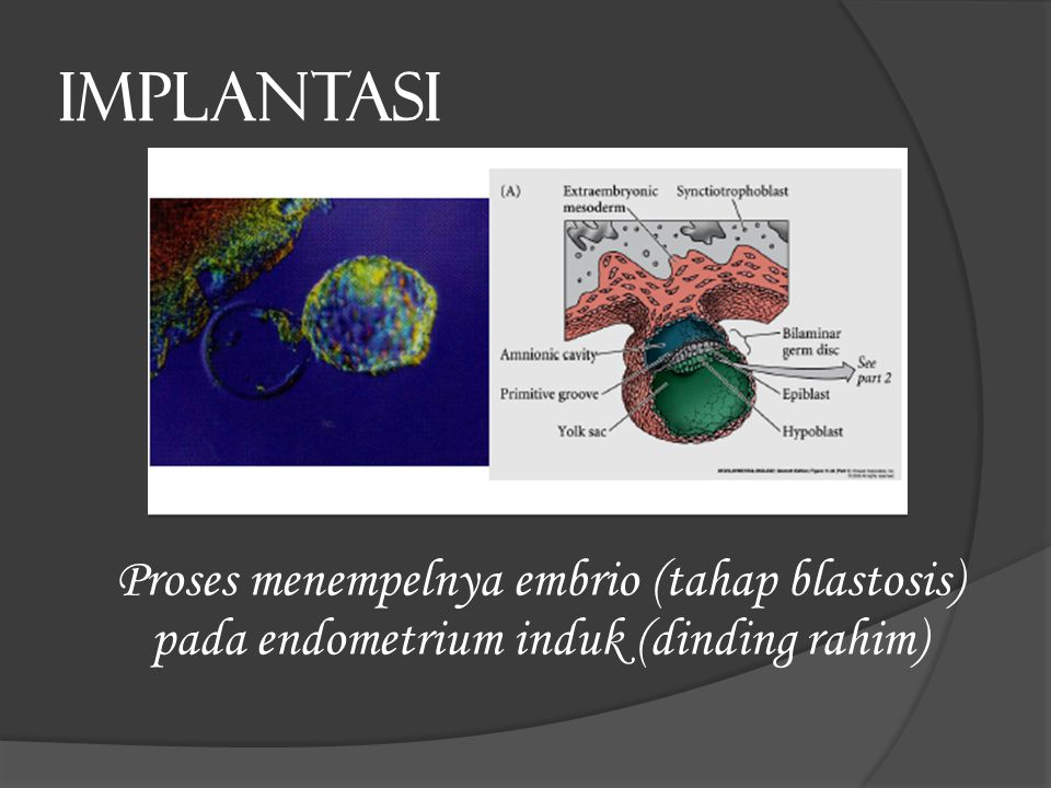 IMPLANTASI Proses menempelnya embrio (tahap blastosis) pada endometrium induk (dinding rahim)