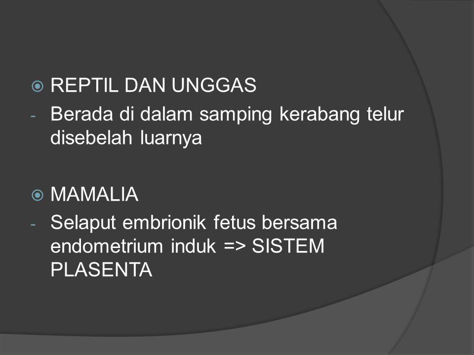  REPTIL DAN UNGGAS - Berada di dalam samping kerabang telur disebelah luarnya  MAMALIA - Selaput embrionik fetus bersama endometrium induk => SISTEM