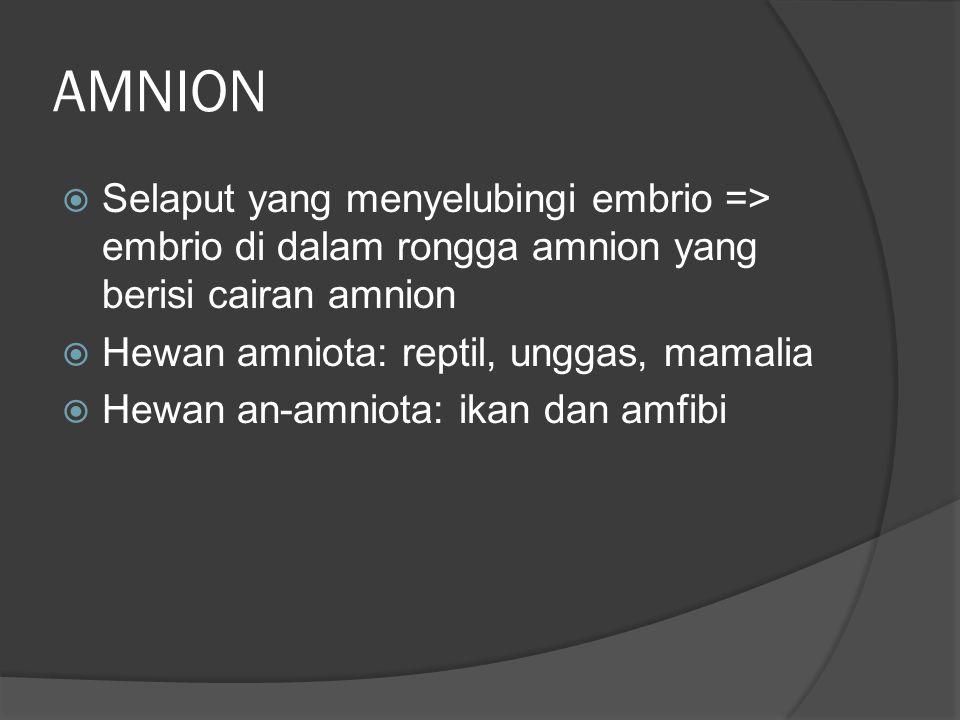 AMNION  Selaput yang menyelubingi embrio => embrio di dalam rongga amnion yang berisi cairan amnion  Hewan amniota: reptil, unggas, mamalia  Hewan