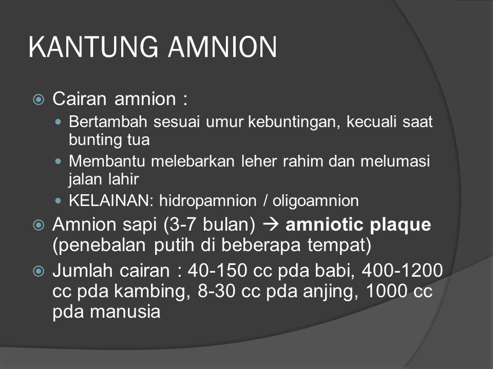 KANTUNG AMNION  Cairan amnion : Bertambah sesuai umur kebuntingan, kecuali saat bunting tua Membantu melebarkan leher rahim dan melumasi jalan lahir