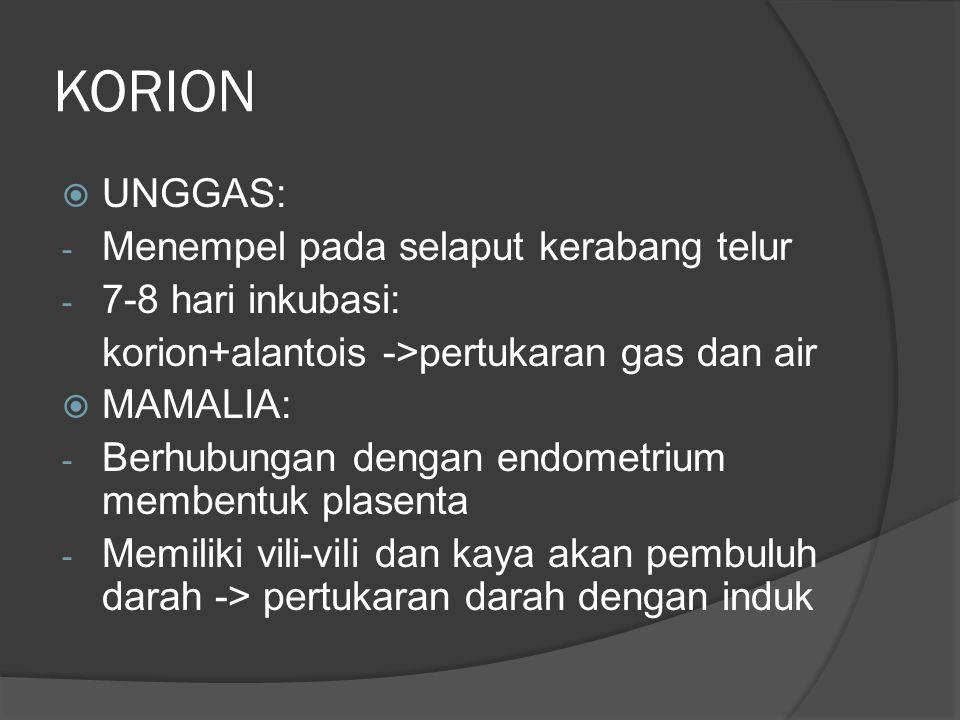 KORION  UNGGAS: - Menempel pada selaput kerabang telur - 7-8 hari inkubasi: korion+alantois ->pertukaran gas dan air  MAMALIA: - Berhubungan dengan