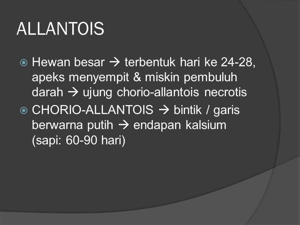 ALLANTOIS  Hewan besar  terbentuk hari ke 24-28, apeks menyempit & miskin pembuluh darah  ujung chorio-allantois necrotis  CHORIO-ALLANTOIS  bint