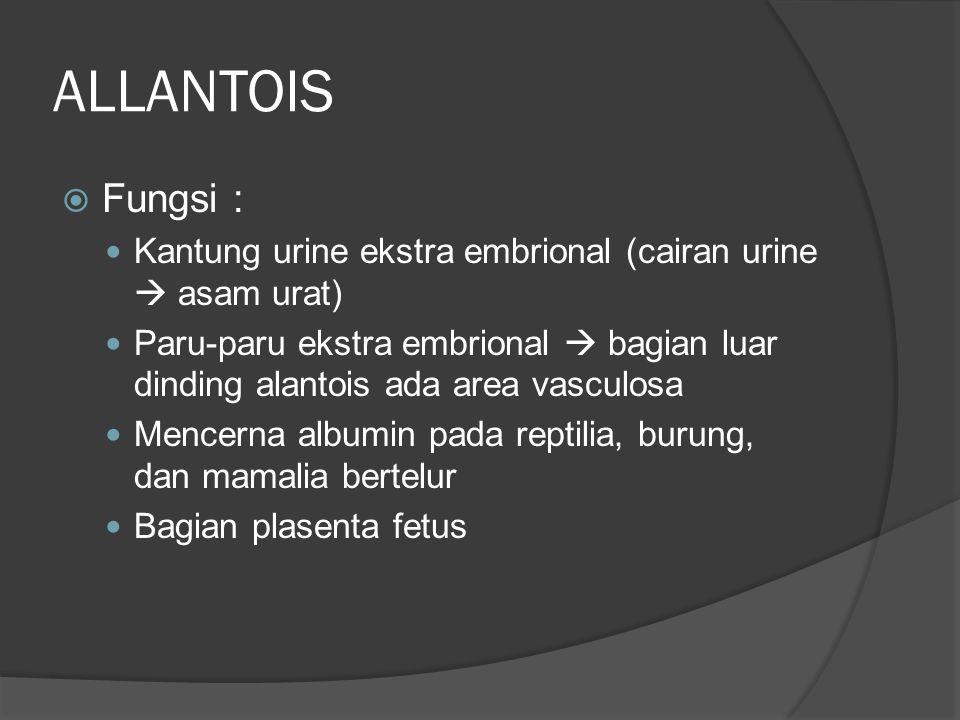 ALLANTOIS  Fungsi : Kantung urine ekstra embrional (cairan urine  asam urat) Paru-paru ekstra embrional  bagian luar dinding alantois ada area vasc