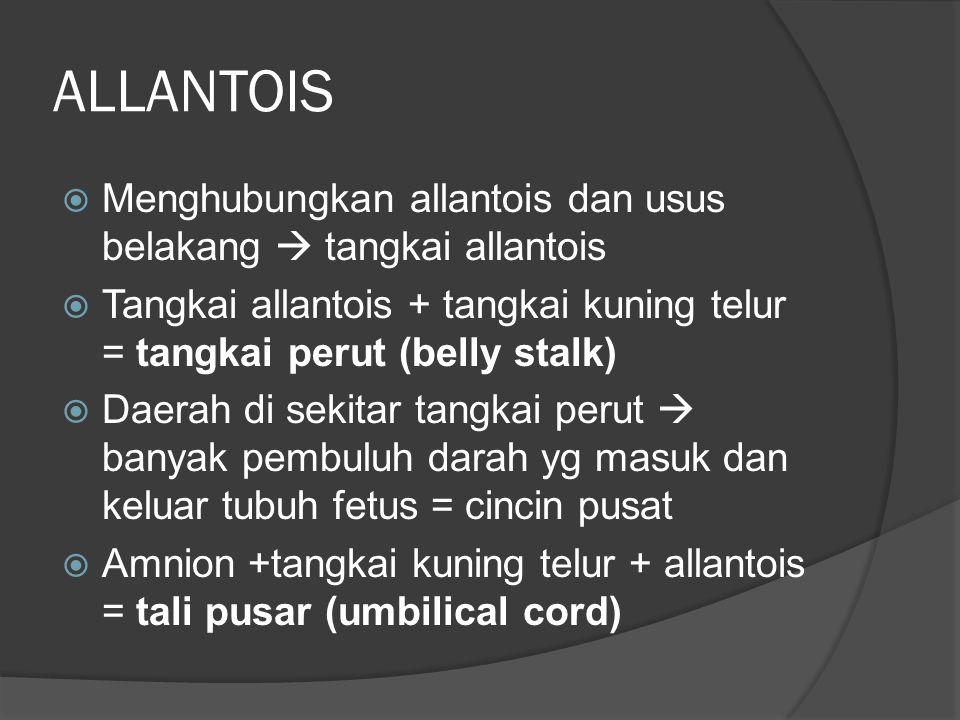 ALLANTOIS  Menghubungkan allantois dan usus belakang  tangkai allantois  Tangkai allantois + tangkai kuning telur = tangkai perut (belly stalk)  D