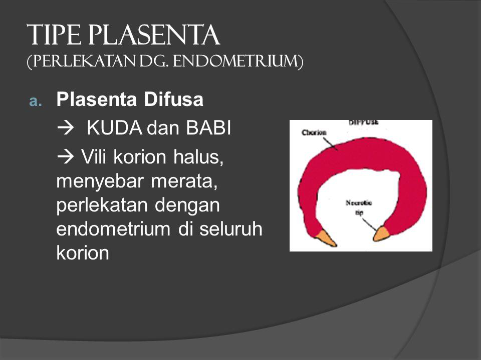 TIPE PLASENTA (PERLEKATAN dg. ENDOMETRIUM) a. Plasenta Difusa  KUDA dan BABI  Vili korion halus, menyebar merata, perlekatan dengan endometrium di s