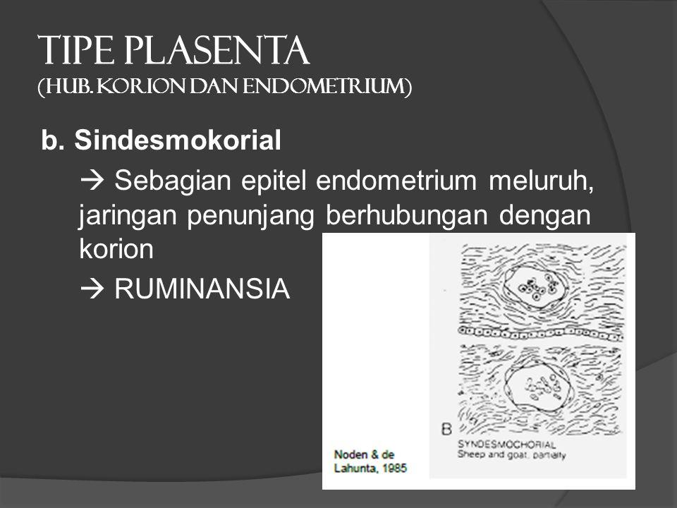 TIPE PLASENTA (hub. Korion dan endometrium) b. Sindesmokorial  Sebagian epitel endometrium meluruh, jaringan penunjang berhubungan dengan korion  RU